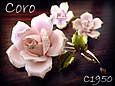 Cororose1